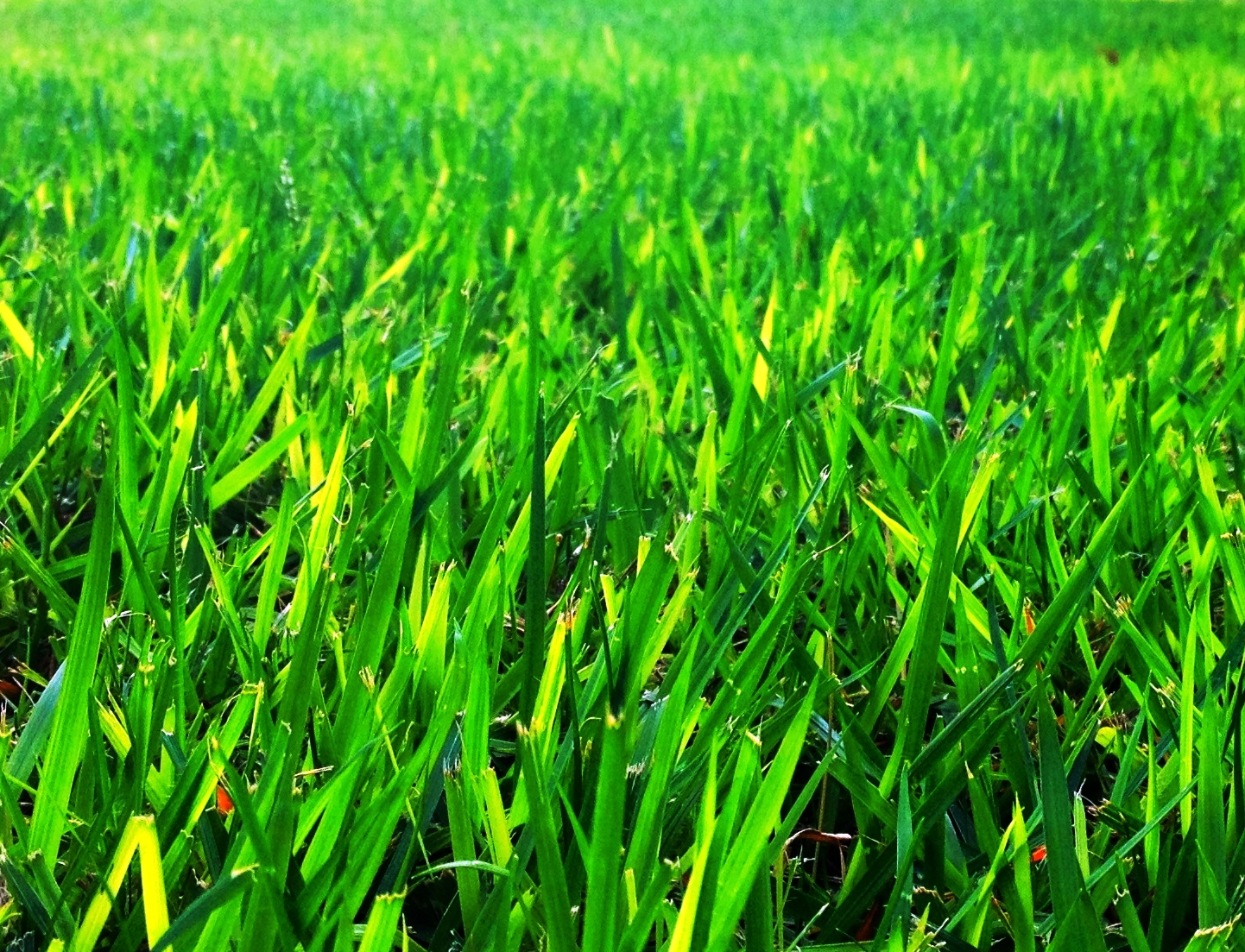יום ירוק