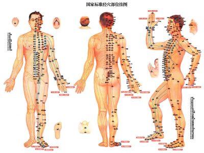 מרידיאנים אכן קיימים: מחקר מדעי בנושא תיאוריית ערוצי האנרגיה בגוף